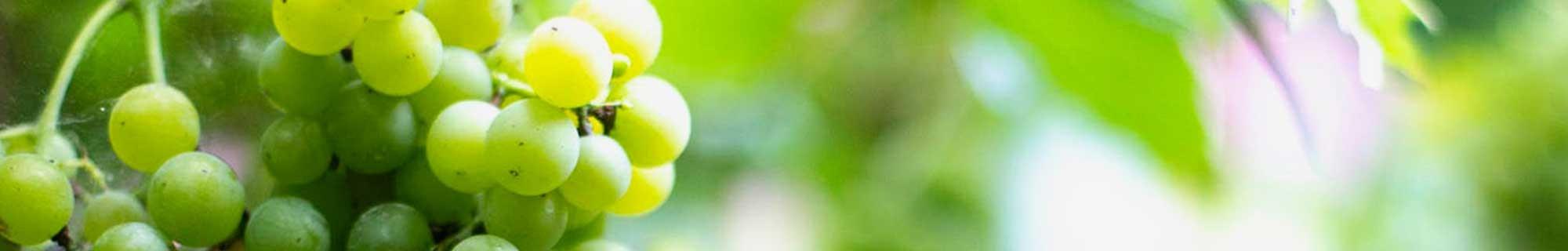 Vini Bianchi Siciliani Pregiati Vendita Online su Tipicosiciliano